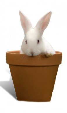 Cute bunny in flower pot